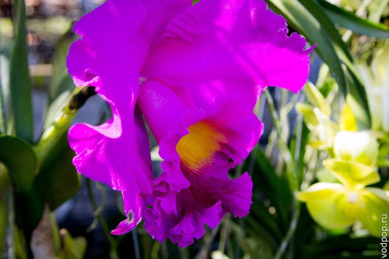 Сад орхидей на Пхукете. Рай для ботаников