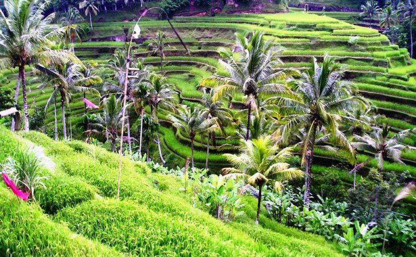 Отдых на Бали – мир экзотики и неимоверных развлечений среди Индийского океана