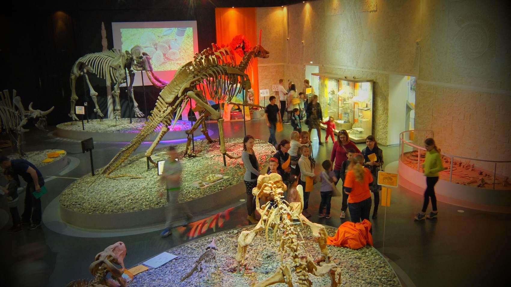 скелет мамонта в музее древностей